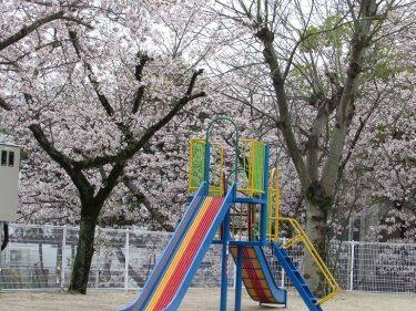 こんな時は外出を控え桜でも眺めて少しの贅沢を!