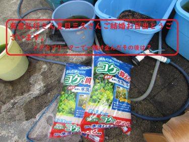 どうでも良いことだ有吉弘行さんと夏目三久さんの結婚とメダカの水替え!
